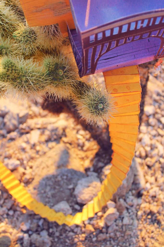 cactus-living16-web